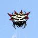 Gasteracantha - Photo (c) Jay L. Keller, όλα τα δικαιώματα διατηρούνται