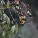 Nectandra cufodontisii - Photo (c) nordic, todos los derechos reservados