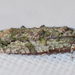 Maple Twig Borer Moth - Photo (c) Larry Clarfeld, all rights reserved