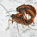 Moscas Escorpión Y Parientes - Photo (c) larry522, todos los derechos reservados, uploaded by Larry Clarfeld