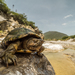 Mud Turtles - Photo (c) Cristian Olvera, some rights reserved (CC BY-NC)