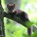 Martens - Photo (c) Steve Collins, all rights reserved