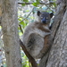 Hubbard's Sportive Lemur - Photo (c) makkusuv, all rights reserved