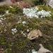 Cooper's Grassland Frog - Photo (c) César Andrés Castillo, all rights reserved