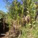 Cyathea dregei - Photo (c) Andriambolantsoa Rasolohery, all rights reserved