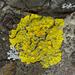 Candelaria fibrosa - Photo (c) Eric Hunt, όλα τα δικαιώματα διατηρούνται