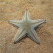 Jonston's Sand Star - Photo (c) Roberto, all rights reserved