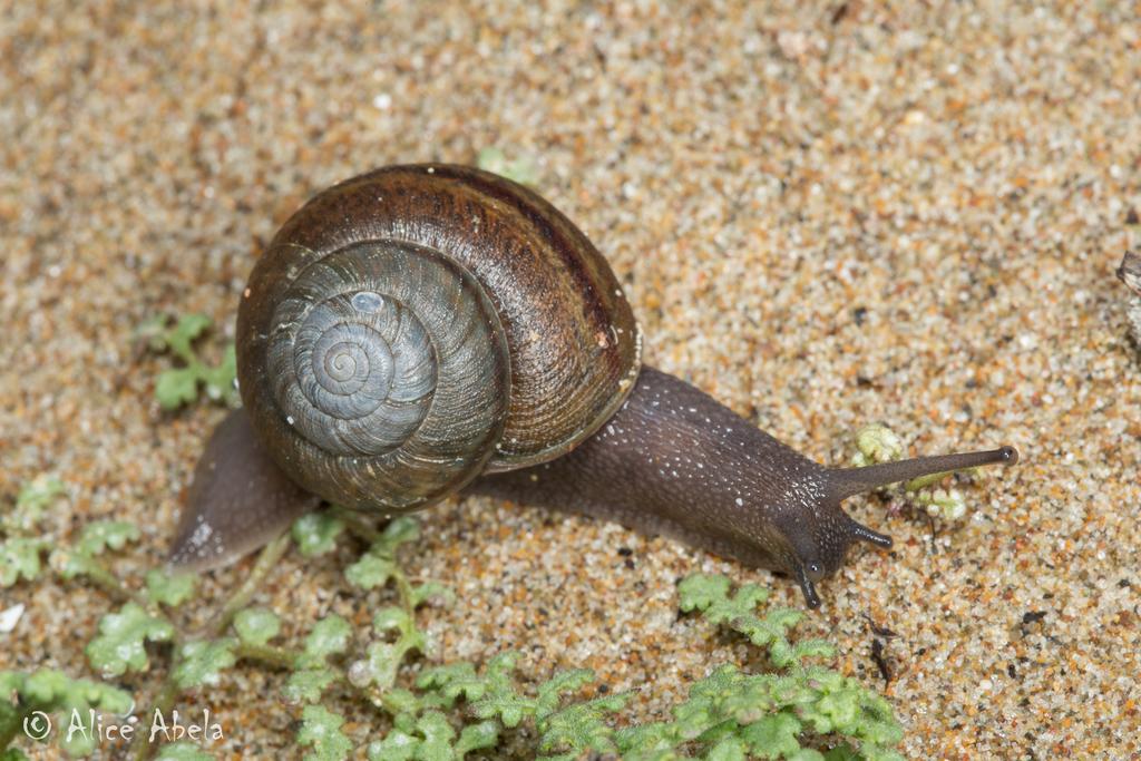 Súlyosan veszélyeztetett állatfajok listája – Wikipédia