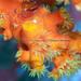 Quadrella boopsis - Photo (c) Shigeru Harazaki, todos los derechos reservados