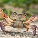Potamidae - Photo (c) Ilias Strachinis, todos los derechos reservados