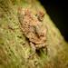 Austrohancockia gressitti - Photo (c) neilwade, all rights reserved