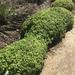 Articulatae - Photo (c) clong1, όλα τα δικαιώματα διατηρούνται