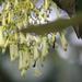 Palicourea lineariflora - Photo (c) GERMAN LEONEL SARMIENTO CRUZ, all rights reserved