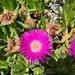 Planta de Hielo - Photo (c) Ioannis Rallis, todos los derechos reservados