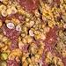 Pilosabia trigona - Photo (c) Diego Barrales, todos los derechos reservados