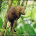 Puercoespín Tropical - Photo (c) Rene Valdes, todos los derechos reservados