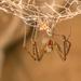 Austrochilidae - Photo (c) Patrich Cerpa, todos los derechos reservados