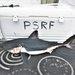 Tiburón Salmón - Photo (c) David McGuire, todos los derechos reservados