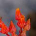 Conchitas, Marmolitos Y Parientes - Photo (c) Chris McCreedy, todos los derechos reservados