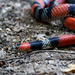 Brazilian False Coral Snake - Photo (c) Henrique Nogueira, all rights reserved
