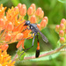 Common Thread-waisted Wasp - Photo (c) jawinget, all rights reserved, uploaded by jawinget