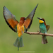 Typical Bee-Eaters - Photo (c) petarbogdanov, all rights reserved