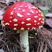Amanita Mushrooms - Photo (c) Alex Barra Carmín, all rights reserved