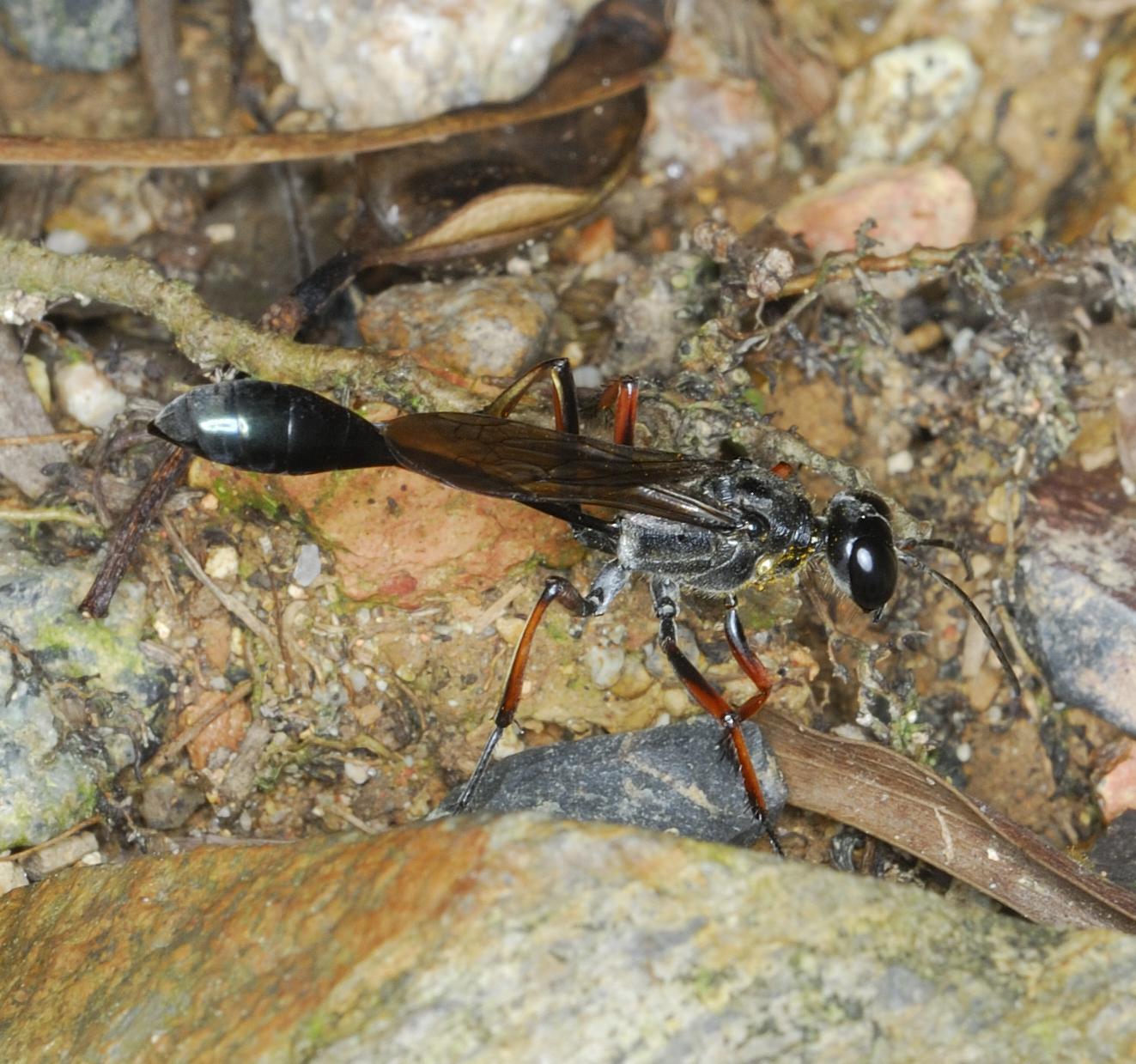 Bộ sưu tập côn trùng 2 Original