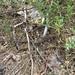 Lacerta agilis chersonensis - Photo (c) Audrius D, todos los derechos reservados