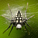 Neogea nocticolor - Photo (c) Lionel Lim, all rights reserved