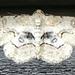 Iridopsis - Photo (c) Scott Camazine, all rights reserved