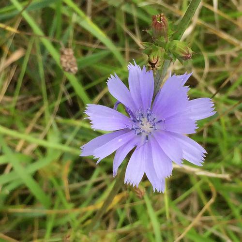 Va Native Plant Society: Virginia Native Plants's Check List · INaturalist.org