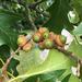 Quercus velutina - Photo (c) Daniel E. Weeks, todos los derechos reservados