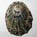 Lottia austrodigitalis - Photo (c) Cedric Lee, todos os direitos reservados