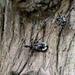 Yolinus - Photo (c) 顏水蛭, kaikki oikeudet pidätetään