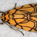 Barsine euprepioides - Photo (c) gernotkunz, todos los derechos reservados