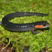 Red-cheeked Salamander - Photo (c) mattbuckingham, all rights reserved