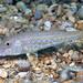 Κουτσομούρα - Photo (c) gernotkunz, όλα τα δικαιώματα διατηρούνται