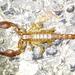 Diplocentrus spitzeri - Photo (c) Jay Keller, todos los derechos reservados, uploaded by Jay L. Keller