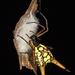 Micrathena brevipes - Photo (c) gernotkunz, todos los derechos reservados
