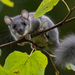 European Fat Dormouse - Photo (c) vogelwurm, all rights reserved
