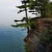 Pinus strobus strobus - Photo (c) Lincoln Durey, todos los derechos reservados