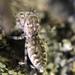 Arañas Saltarinas Alargadas - Photo (c) Matt, todos los derechos reservados