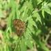 Symbrenthia brabira scatinia - Photo (c) wu050440, todos los derechos reservados