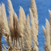 Grasses, Sedges, Cattails, and Allies - Photo (c) Arthur Chapman, some rights reserved (CC BY-NC-SA)