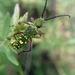Ochraethes sulphurifer - Photo (c) Lalo B. G., todos os direitos reservados