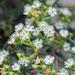 Ruschia indecora - Photo (c) Tig, todos los derechos reservados