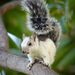 Typical Squirrels - Photo (c) Kurt Bauschardt, some rights reserved (CC BY-SA)