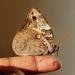 Mariposas Búho - Photo (c) katie lynn, todos los derechos reservados
