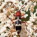 Chlorophorus trifasciatus - Photo (c) Valter Jacinto, כל הזכויות שמורות